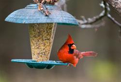 bird-feeding-2
